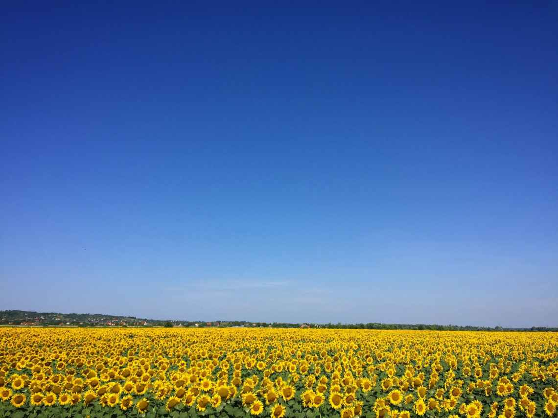 agriculture blooming blossom blue sky